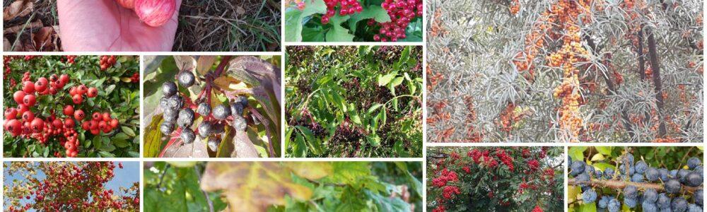 Wildsträucher und Wildpflanzen